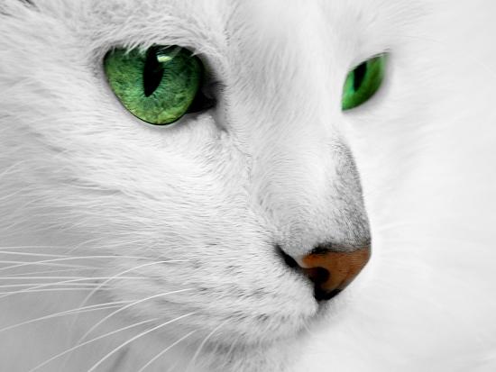 Psychic Cat